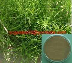 Horsetail Extract, Silicone (Silica)