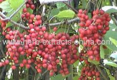 Nutritional Medicated Oil Yellowish Oily Schizandra Essentia