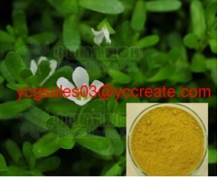 Bacopa Extract, Bacoside A&B