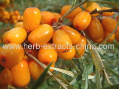 Ingredients of Seabuckthorn Seed Oil and its Health Benefici