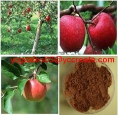 Apple extract, Apple P.E. polyphenol