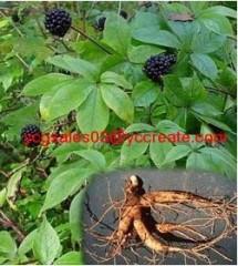 Siberian Ginseng Extract, Eleutheroside B+E