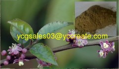 Pubescent Holly Root Extract