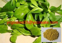 Common Andrographis Herb Extract, Andrographolide