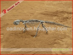 Dinosaur skeleton in small size