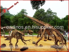 OEM service dinosaur skeleton