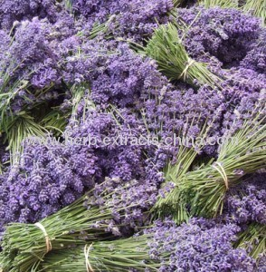 Aromatic Lavender essential oil from China type Lavandula