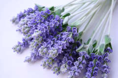 Steam distilled China type Lavender oil for all skin care