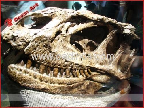 Fiberglass Fossil Replicas Yangchuanosaurus skull products ...