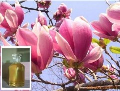 Magnolia Flower Essential Oil