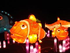 Festival lantern shows