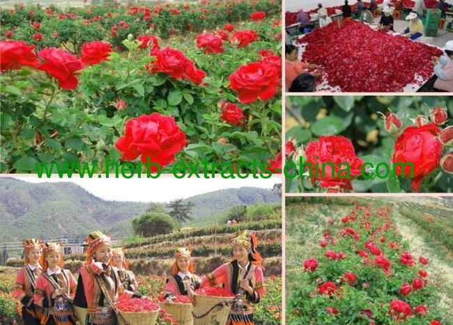 Cosmetic Rose Essential Oil