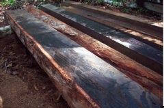 ebony wood, sawn logs and timber