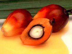 sunflower oil,canola oil,soyabeans oil,Olive Oil, Castor Oil, Corn Oil ,Rapeseed Oil,crude palm oil