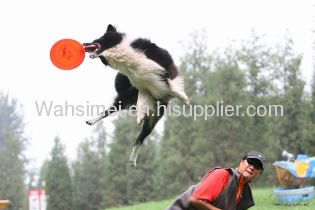 2012 Fashion design silicone flying disc for pet