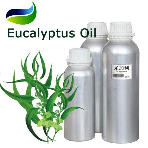 Pure Eucalyptus Oil extracted Eucalyptus globulus Labill