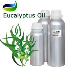 Globulus Eucalyptus Oil 1 8-Cineole 70% & 80%