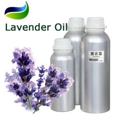 Perfume Lavender Oil extracted from Lavandula augustifolia