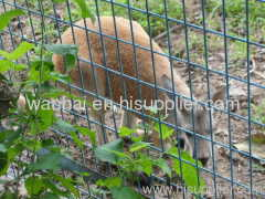 WIRE MESH ZOO FENCE