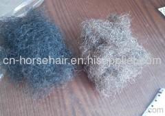 curl horse mane hair