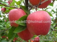 fresh red star apple