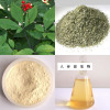 Ginsenoside extract Ginseng extract
