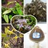 Epimedium herb or Epimedium Extract