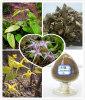 Epimedium herb/Epimedium Extract Icariin