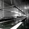 Chicken processing equipment suspension conveyor line