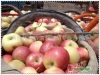 shaanxi Fresh gala apple