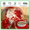 pomegranate extract herb medicine