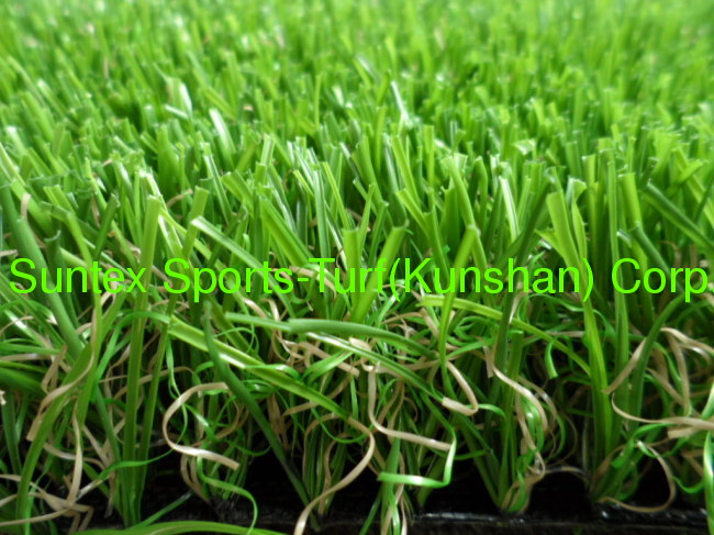 high quality carpet grass for landscape