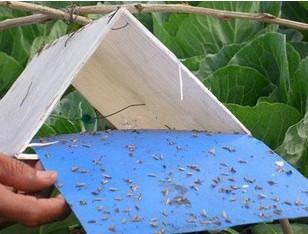 BLUE trap board trap moth killing board thrips whitefly glue