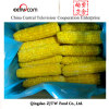 IQF super sweet corn