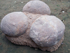 Animated Dinosaur egg fossils