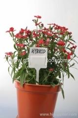 Plastic DIY Tuin Plant Marker voor identificeren plant naam