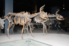 life size animal skeleton animal exhibition plastic animal skeleton
