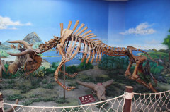 fiberglass animal skeleton life size animal skeleton Zigong animal skeleton