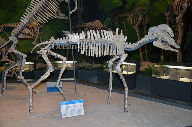 Artificial skeleton animal show