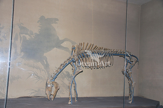 Attractive fossil of animal for buyers