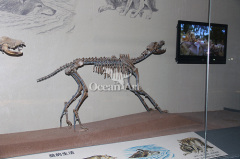 artificial animal fossil animal fossil for sale