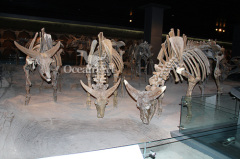 life-size animal skeleton artificial animal