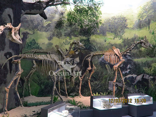 life-size animal fossil and skeleton