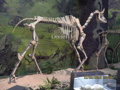 life size museum animal skeleton