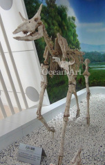 life size animal fossil model for sale