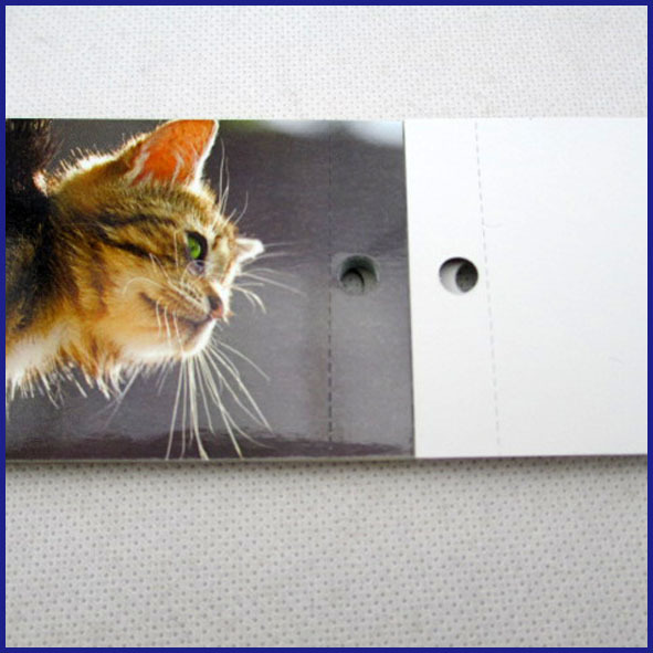 cats magnetic calendar 2014