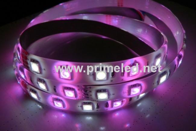 36LED/M RGBW LED Strip lighting