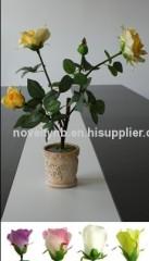 New design flower light