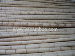 big dry bamboo poles