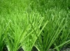 artificial turf football turf